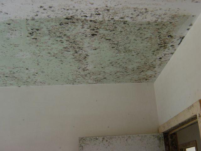 Bouwdroger - Schimmels in uw nieuwbouw? Beter voorkomen dan genezen!